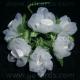 Organza & Satin Flowers - White