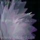 Organza - Peaked Edge - White/Pink